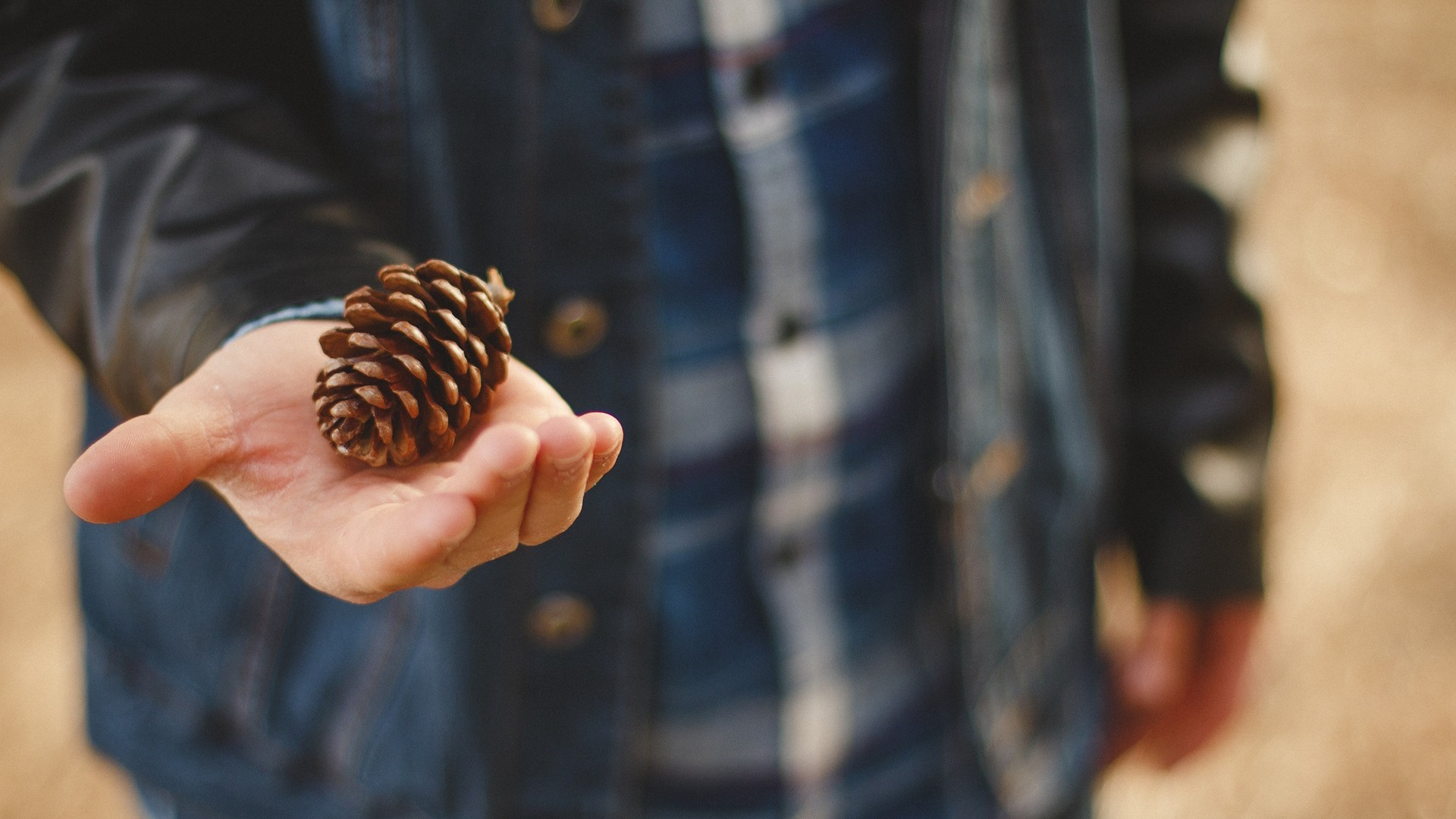 pinecone in hand